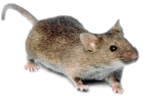 Mice Control PNG