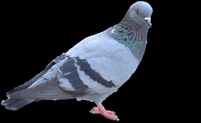 Bird Control Brighton MI